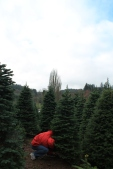 The rain cleared just long enough for us to find our perfect tree!
