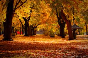 Fall-foliage-Boston-MA